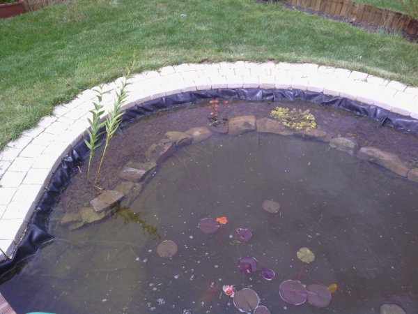 Amenagement des bords du bassin bassin de jardin 62 for Amenagement bassin de jardin